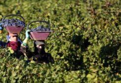 L'agriculture au Liban