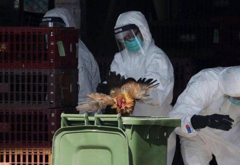 L'influenza aviaire en Chine