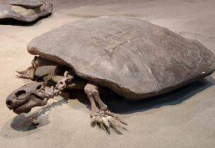 Fossile de tortue trouvé en Chine