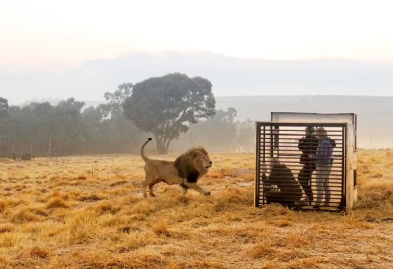 Parc JJ Lion en Afrique du Sud