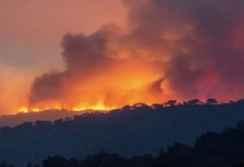Des incendies ravagent l'Algérie