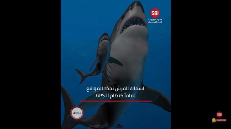 Elle est sortie seule du ventre de sa mère, le requin GBS, la catastrophe de selfie, un diamant pour 13 millions